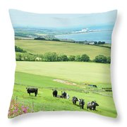 cattle in field and east coast Berwickshire Throw Pillow