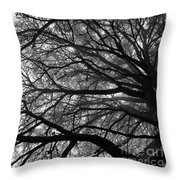Cedars In The Mist Throw Pillow