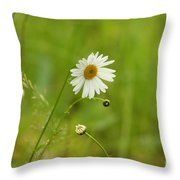 Chamomile Or Daisy? Throw Pillow