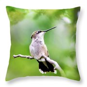 Charming Hummingbird Square Throw Pillow