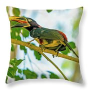 Chestnut-eared Araacari Throw Pillow