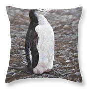 Chinstrap Penguin Portrait By Alan M Hunt Throw Pillow by Alan M Hunt