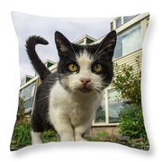 Close Up Cat On The Street Throw Pillow