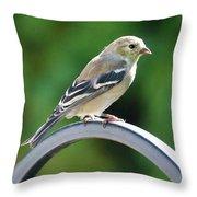 Closeup Of Goldfinch Throw Pillow