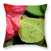 Cloudless Sulphur Throw Pillow