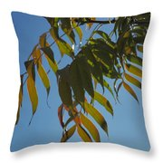 Colors Of The Neighborhood 24 Throw Pillow