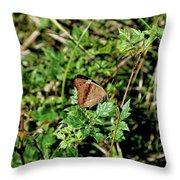 Common Buckeye Butterfly Throw Pillow