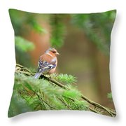 Common Chaffinch Fringilla Coelebs Throw Pillow