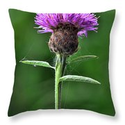 Common Knapweed 1 Throw Pillow