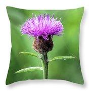 Common Knapweed 2 Throw Pillow