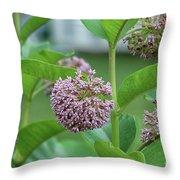 Common Milkweed Throw Pillow