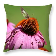 Cone Flower Butterfly At Rest Throw Pillow