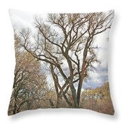 Cottonwood Az Bayou Leafless Tree Sky Clouds Path 31262019  Throw Pillow