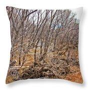 Cottonwood Az Bayou Leafless Trees Scrub Water Sand Clouds 3262019_5320 Throw Pillow