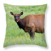 Cow Elk Grazing Throw Pillow