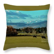 Cows Eat And Chew Their Cud Throw Pillow