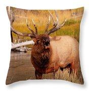 Creekside Bull Throw Pillow