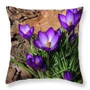 Crocus In Spring 2019 I Throw Pillow