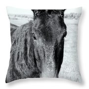 Crusty The Mule Throw Pillow