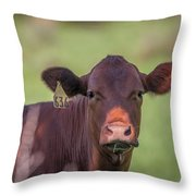 Curious Cow #636 Throw Pillow by Tom Claud