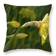 Daffodil In Sun Throw Pillow