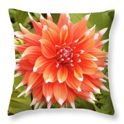 Dahlia Bloom Flower Throw Pillow