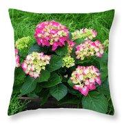 Decorative Floral Pink Hydrangeas C031619 Throw Pillow by Mas Art Studio