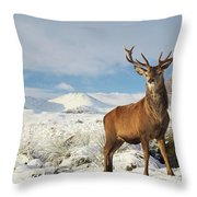 Deer In The Snow Throw Pillow