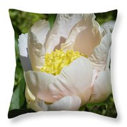 Delicate Pastel Peach Cupped Peony Blossom Throw Pillow