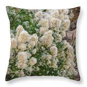Desert Broom V1804 Throw Pillow by Mark Myhaver