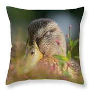 Duck 2 Throw Pillow