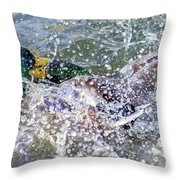 Duck Fight Throw Pillow