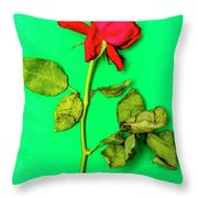 Dying Flower Against A Green Background Throw Pillow