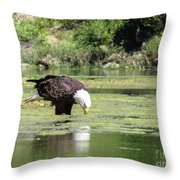 Eagle's Drink Throw Pillow