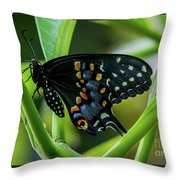 Eastern Black Swallowtail - Closed Wings Throw Pillow