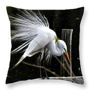Egret Pride Throw Pillow