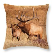 Elk And Mate In Rocky Mountain Meadow Throw Pillow