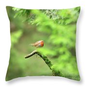 English Robin Erithacus Rubecula Throw Pillow