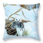 Ermine Throw Pillow by Michael Chatt