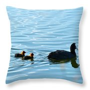 Eurasian Coot And Offspring In Ria Formosa. Algarve, Portugal Throw Pillow