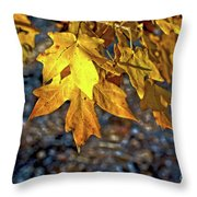 Fall Has Sprung Throw Pillow