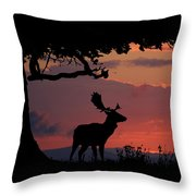 Fallow Stag At Sunset Throw Pillow
