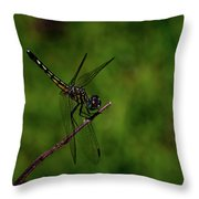Female Blue Dasher Dragonfly Throw Pillow