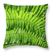 Fern Throw Pillow by Nick Bywater