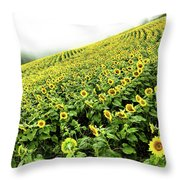 Fields Of Yellow Throw Pillow by Shane Kelly