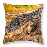 Florida Gator 1 Throw Pillow