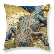 Florida Gator 2 Throw Pillow