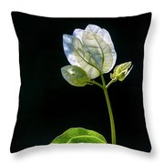 flowers of a Bougainvillea w4 Throw Pillow