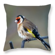 Fluffy Goldfinch Throw Pillow