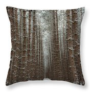 Forest In Sleeping Bear Dunes In January Throw Pillow